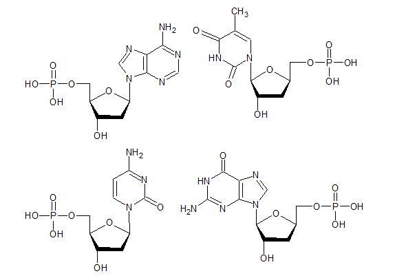 biokim1