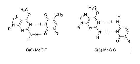 biokim2